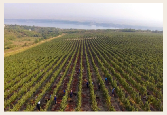 Burgozone vinmarker
